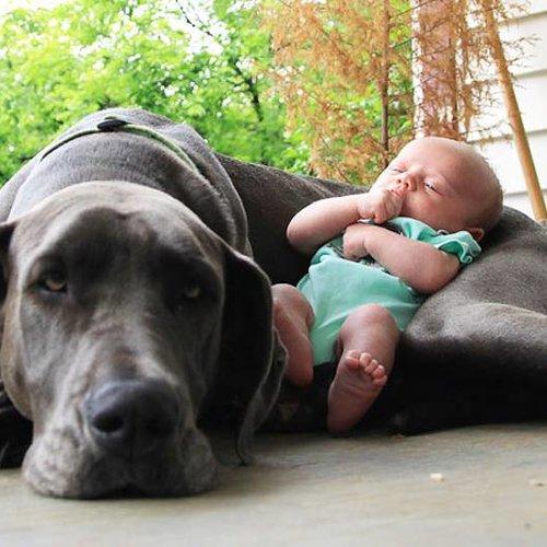 Krankheiten und Haustiere