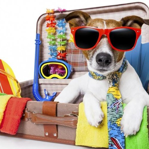 Urlaubsstress Haustieren