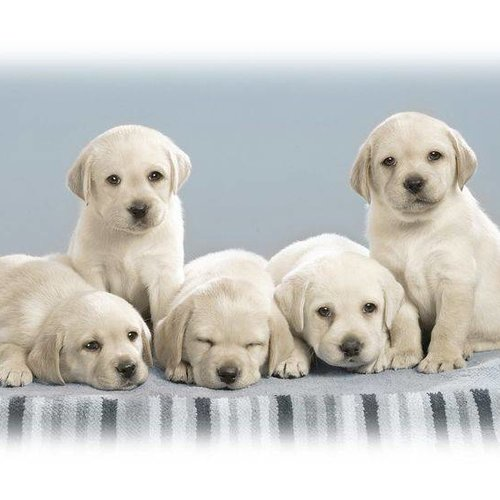 Puppy kopen - Tips