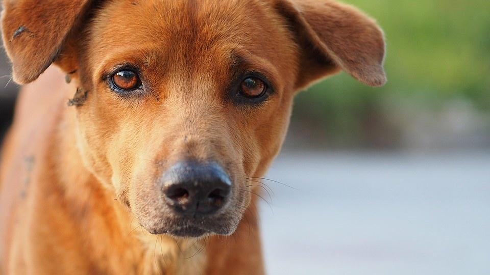 wat doet giardia bij honden)