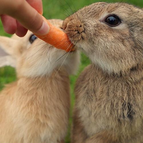 Een konijn met buikpijn