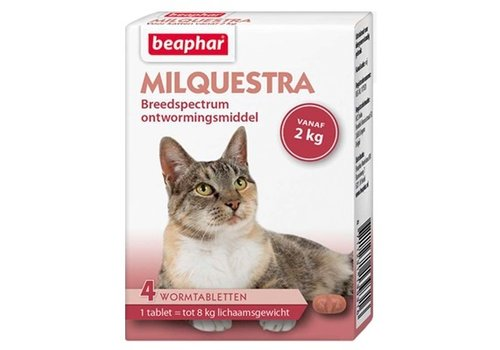 Milquestra Große Katzen - 4 st