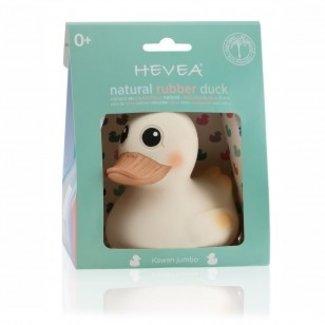 Hevea Hevea Natural Rubber Kawan Jumbo