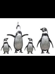 MondiArt Alu Brush | Familie Pinguins 80 x 120