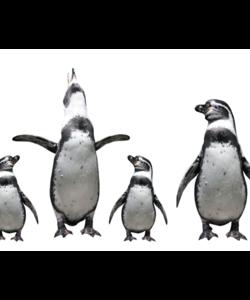 Alu Brush | Familie Pinguins 80 x 120