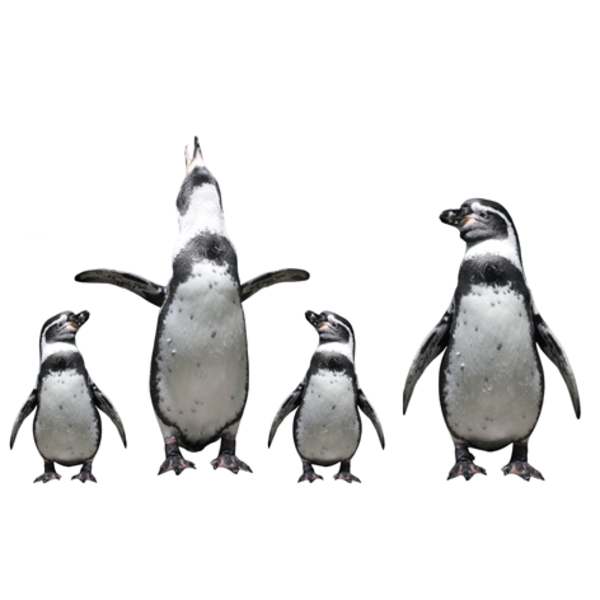MondiArt Alu Brush | Familie Pinguins 80 x 120