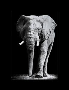 MondiArt Alu Brush | Olifant 120 x 180