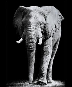 Alu Brush | Olifant 120 x 180