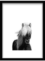 Urban Cotton Wild Horse 61x41