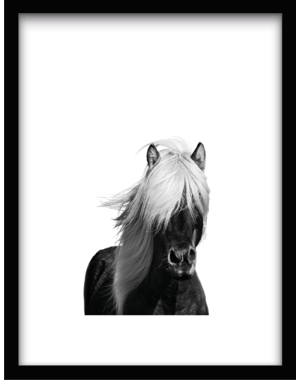 Urban Cotton Wild Horse 61x41