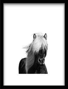 Urban Cotton Wild Horse 41x31