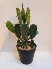 Cactus 17,75 x 15,25 x 31,75 cm