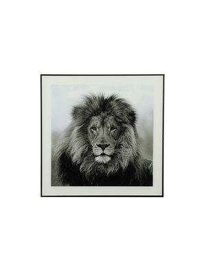 Countryfield Schilderij leeuw Wild life S