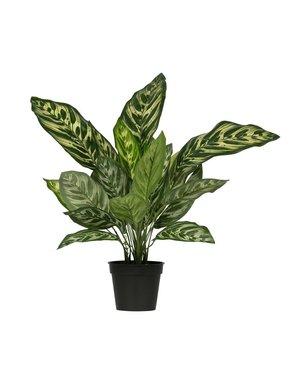 Woood Aglaonema kunstplant 50 cm