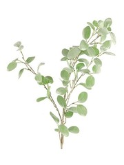 Countryfield Tak Eucalyptus groen