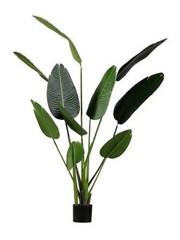 Strelitzia kunstplant groen 164 cm