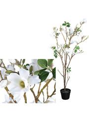 PTMD Tree Magnolia witte boom in zwarte pot