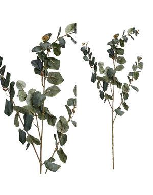 PTMD PTMD Leaves Plant Groen Grijs eucalyptus tak
