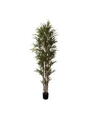 PTMD Tree green bamboo tree in black plastic pot L