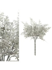 PTMD Leaves Plant Groen dusty miller tak