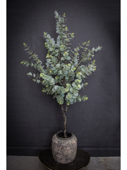 PTMD Tree Groen eucalyptus boom in zwarte plastic