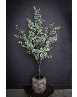 PTMD Tree Groen eucalyptus boom in zwarte plastic pot