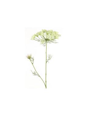 Countryfield Heracleum sphondylium wit