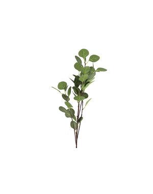 Countryfield Tak Eucalyptus groen 2