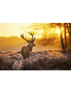 MondiArt Alu Art    Red Deer in Morning Sun
