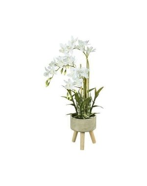 Parlane Orchidee in pot 30x30x65cm CYCNOCHES grijs/wit