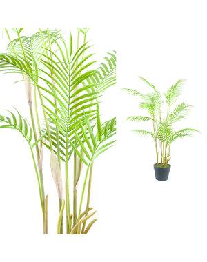 PTMD Palmboom groen in zwarte plastic pot