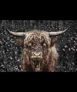 Alu Art | Koe bruin 120 x 180