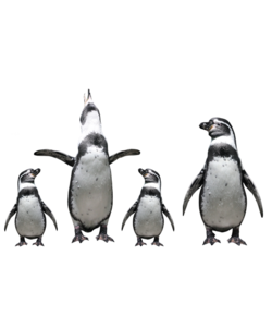 Alu Brush | Familie Pinguins 80 x 120