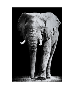 Alu Brush | Olifant 120 x 180