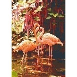 PixelHobby Pixelhobby patroon 5562 Twee Flamingo's