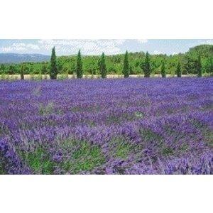 PixelHobby Pixelhobby patroon 5466 Lavendel veld