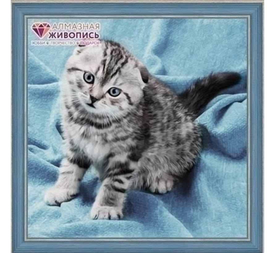 Artibalta Diamond Painting pakket Kitten AZ-1465