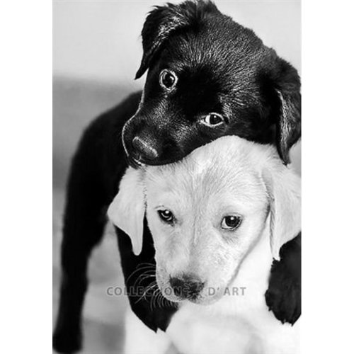 Collection D Art Diamond Painting Black and White Puppies de0453