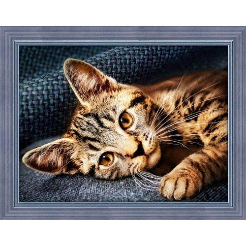 Diamond Painting Poezen en Katten