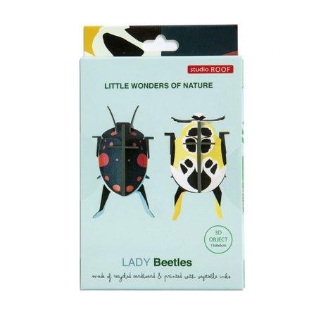 lady beetles IMA24