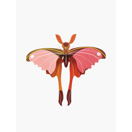 pink  comet butterfly IMA46