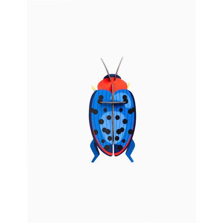 fungus beetle IMA62