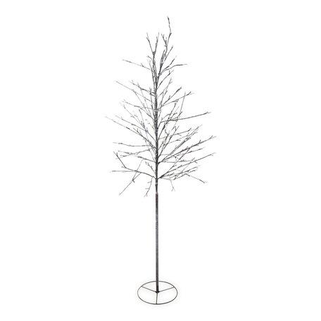 Alex tree