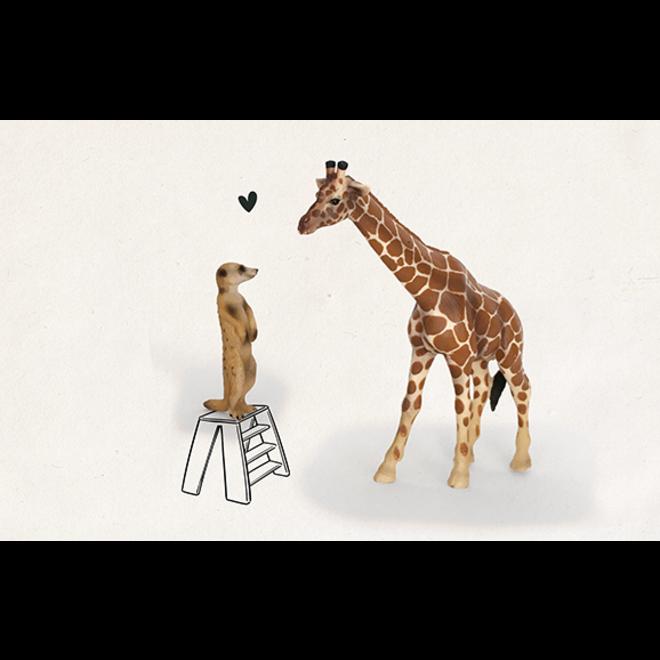 LEUKE KAARTJES - Safari - Love