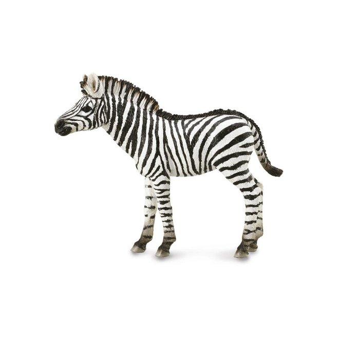 COLLECTA - Wilde Dieren - Zebra Veulen (M)