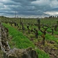 Chenin Blanc: een lofzang op deze vergeten druif
