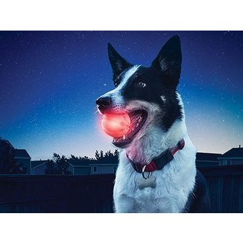 Nite Ize Nite Ize Glowstreak Dog Led Ball - Red