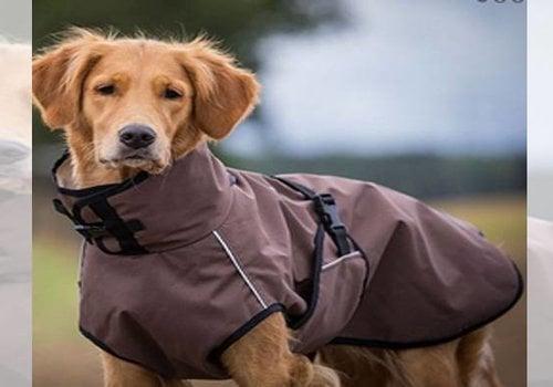 Hondenvesten & Jassen