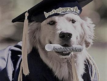 Jachthonden training 2021