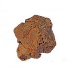 Olijfboom Kauwwortel 500-750gr